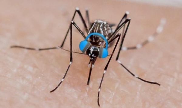 Необычное открытие: комары не переносят музыку Skrillex
